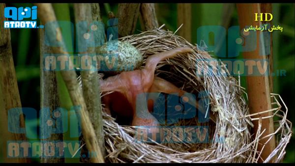 http://www.uplooder.net/img/image/16/328df2e5ff46a38c2c11552f22d86de1/89.jpg