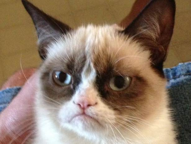 http://www.uplooder.net/img/image/18/7cce11b8a4ccd1baadf268a1c5e5f66e/grumpy-cat-still-hates-everyone-at-south-by-southwest.jpg.png