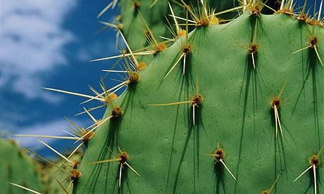 http://www.uplooder.net/img/image/2/b9aa390e4582f7a59ef9e927d9636127/Cactus-006.jpg