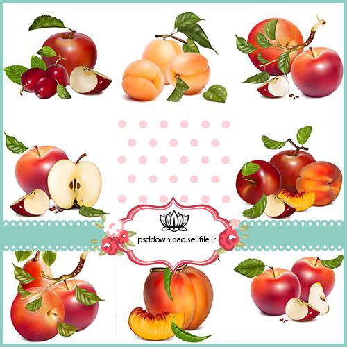 وکتور استوک میوه