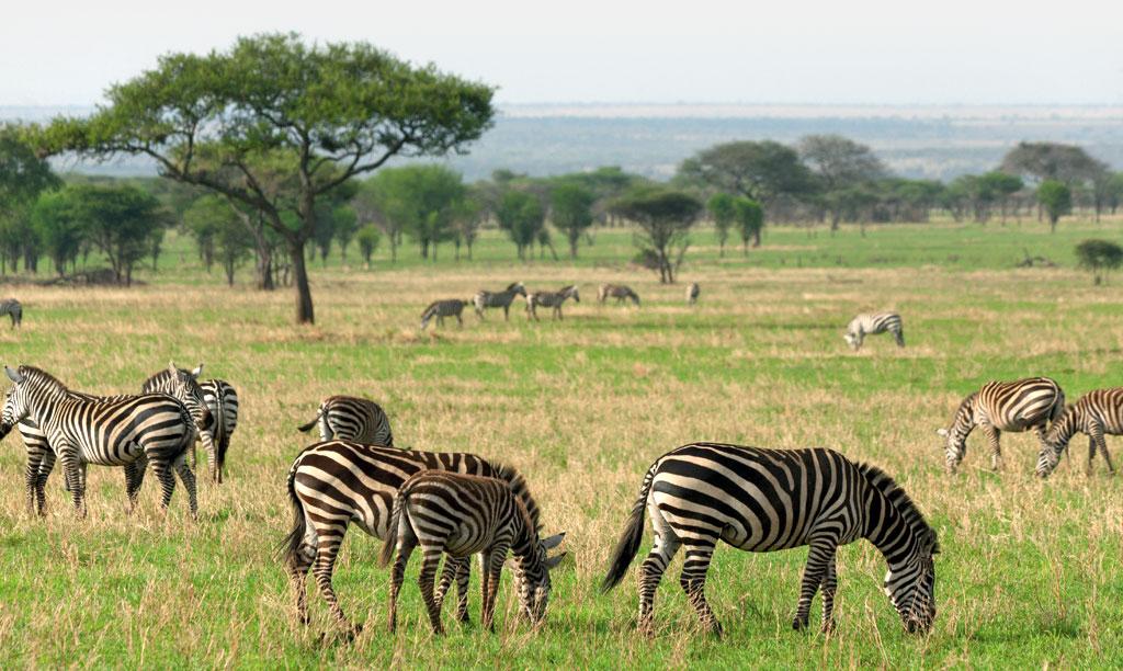 http://www.uplooder.net/img/image/3/f487ad9e6d9da4370ba216cb76cdb330/savannah-south-africa3.jpg