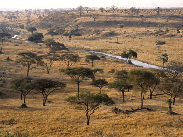http://www.uplooder.net/img/image/37/93460e1e3821688a769f15924ad8f416/acacia-tree-africa-41-600x450.jpg