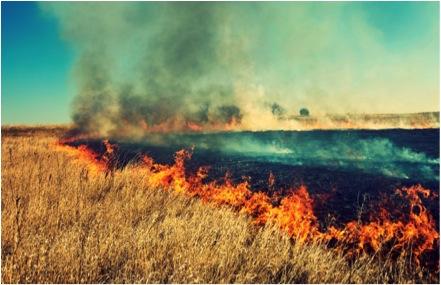 http://www.uplooder.net/img/image/37/cb1741b08619ecf8a4b5f0f2be6e5145/savanna-fire-management.jpg