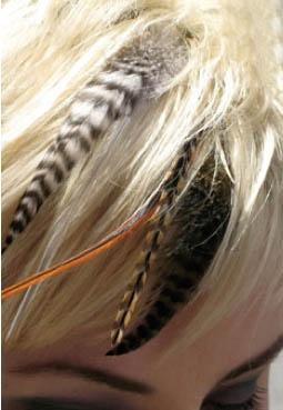 [تصویر:  Hair_Feather_Pet_Plumes_Bloom-6-1.jpg]