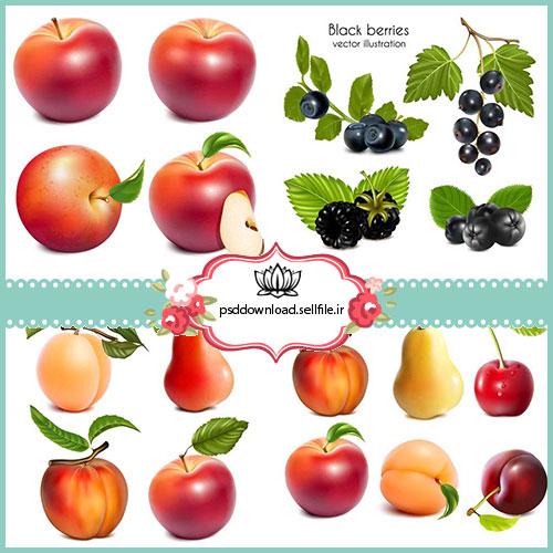وکتور میوه های متنوع