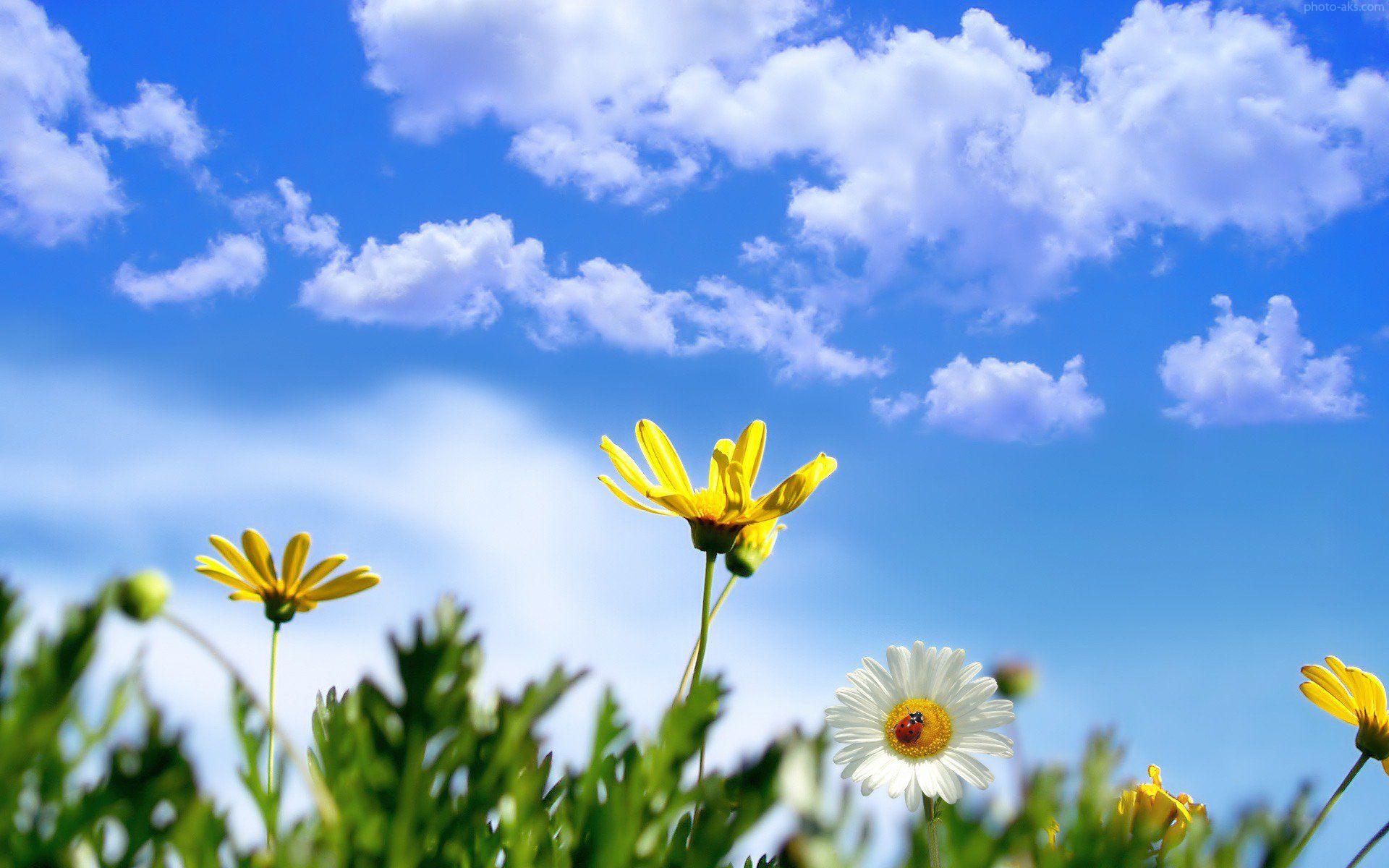 http://www.uplooder.net/img/image/6/9cc8551b2ecd960527e9e33a46c522bf/nature_springtime_wallpaper.jpg