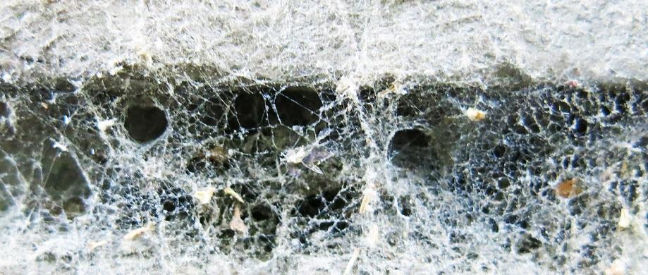 تور عنکبوت گارفیلد