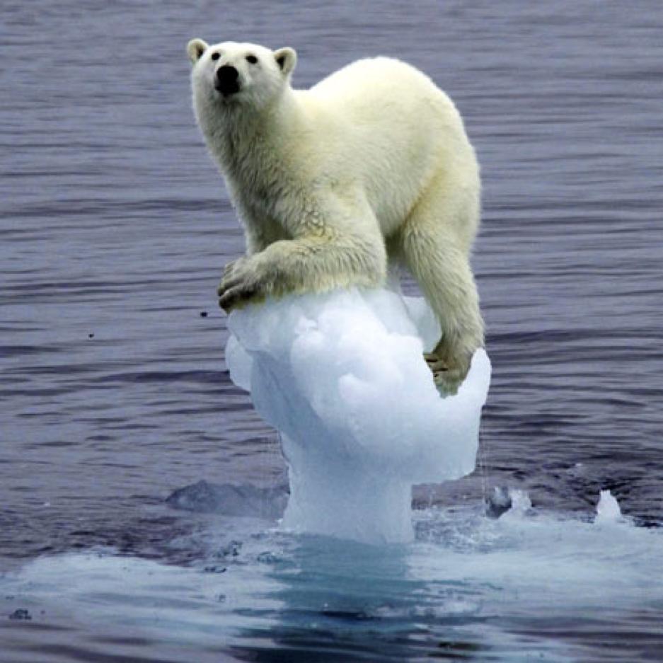 http://www.uplooder.net/img/image/67/ede255b7d0aa357da873260c743f68a9/polar-bear.png