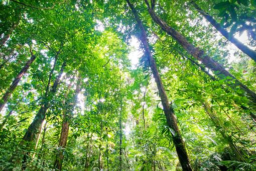 http://www.uplooder.net/img/image/72/83e48ca129188b60ecbc772a4170a741/LQL076-Tropical-Rainforest.jpg