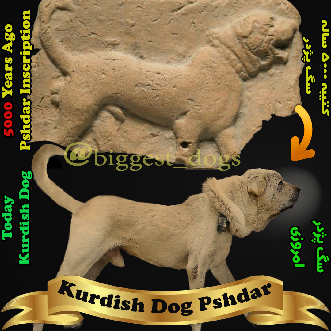 kurdish dog inscription-assyrians dog inscription-mesopotamia dog clay plaque-pshdar dog-سگ کردی-سگ پژدر-کتیبه سگ کردی-کتیبه سگ پژدر