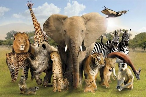 http://www.uplooder.net/img/image/83/573738dacbc0e079df94ec218a2e4248/animal-africa-savannah-group-poster-GBph0452.jpg