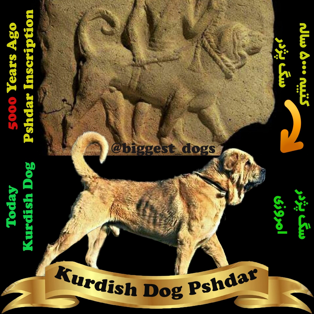 Kurdish dog Inscription-Assyrians dog inscription-mesopotamia dog clay plaque-pshdar dog-سگ پشدر-سگ پژدر-سگ کردی-کتیبه سگ پژدر-کتیبه سگ کردی
