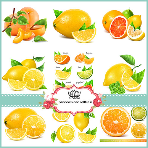 وکتور لیمو و هلو و پرتقال